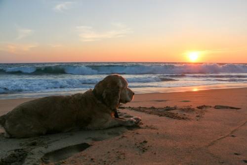 Perro guias Playas