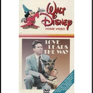 Historia de Película Perro Guia