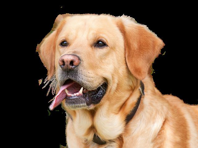 Diez ruegos de un perro